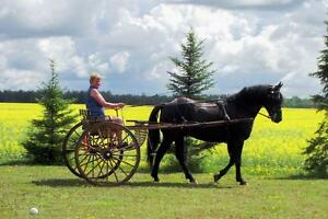 Horse Single Driving Equipment for Sale