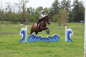 Love Horses? Want to Ride? Don't Have a Horse? Lease a Horse