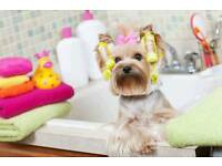 The Poochie Palace - Mobile Dog Grooming