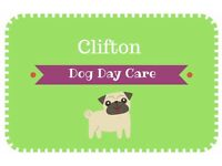 Dog Walking, Puppy Day Care and Dog Sitting in Clifton - FREE FIRST BOOKING