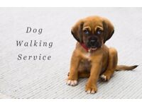 Reliable, responsible and flexible dog walker and petsitter available. Walking dogs is my passion!