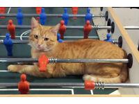 Missin Ginger Cat, Mitcham