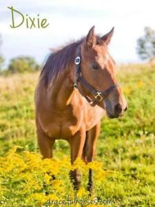 "Young Female Horse - Quarterhorse: ""Dixie"""