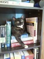 """Young Female Cat - Dilute Tortoiseshell: """"Sandy"""""""