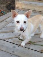 """Young Female Dog - Terrier: """"Valentina"""""""