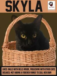 KLAWS Kitty - Black Beauty Skyla
