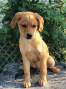 "Baby Male Dog - Mixed Breed: ""Miller"""