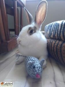 "Young Female Rabbit - American: ""Marilyn Bunroe"""