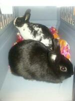 "Young Female Rabbit - Dwarf: ""Elsa and Anna"""