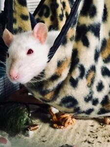 """Young Female Small & Furry - Rat: """"Tofu"""""""