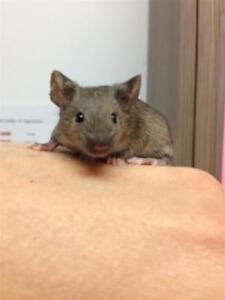 "Young Male Small & Furry - Mouse: ""Newton"""
