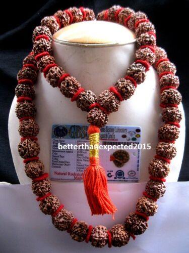 5 Mukhi Rudraksha 5 Face Rudraksh 20 mm Nepal bead Kantha Mala LAB CERTIFIED