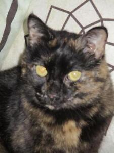 "Adult Female Cat - Tortoiseshell-Domestic Short Hair: ""Ellsie"""