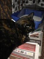 """Young Female Cat - Tortoiseshell: """"Leloo"""""""