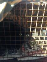 """Young Male Cat - Domestic Short Hair-black: """"Spider from Mars"""""""