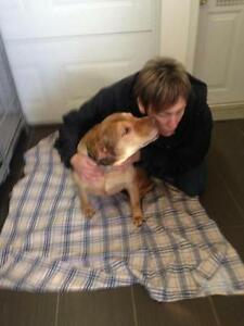 "Senior Male Dog - Shar Pei: ""Gumbo arbedrescue"""