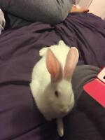 "Young Female Rabbit - New Zealand: ""DJ"""