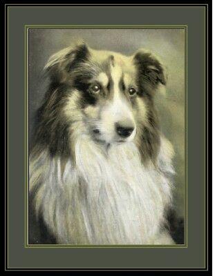 English Print Australian Shepherd  Dog Head Art Picture
