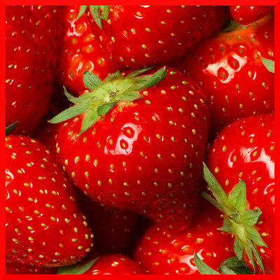 10mL Fragrance Oil Scent Concentrate ❀ Candle Making Soap Bath Bomb ❀ Strawberry