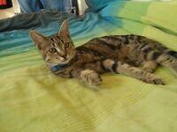 Beautyful kitten 😍