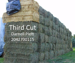 HAY BALES Big Squares Alfalfa Timothy Orchard Cattle Horses Beef