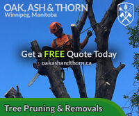 Tree Removal & Pruning | Stump & Root Grinding | Oak Ash & Thorn