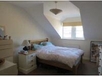 Professional tenant wanted for double room YORK