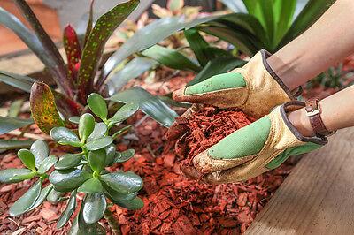 Rindenmulch hält die Feuchtigkeit im Boden, sodass Du weniger gießen musst. (© Thinkstock via The Digitale)