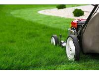 Gardening - Lawn mows, strimming, Hedge cuts - Free quotations
