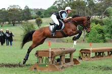 EVENTING MARE FOR SALE Armidale City Preview