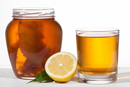 Kombucha Kit - SCOBY & Starter Tea & Instructions
