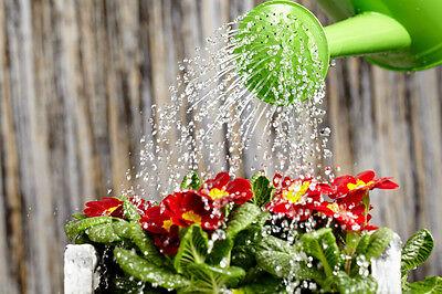 Wer morgens gießt, verbraucht weniger Wasser und muss seltener nachwässern. (© Thinkstock via The Digitale)