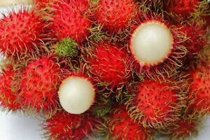 Exotic fruit seeds for sale