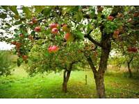 Agricultural land wanted for small apple orchard