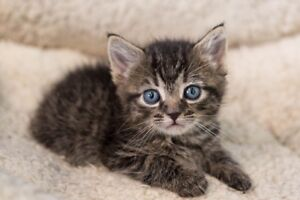 Looking for 2 young kittens