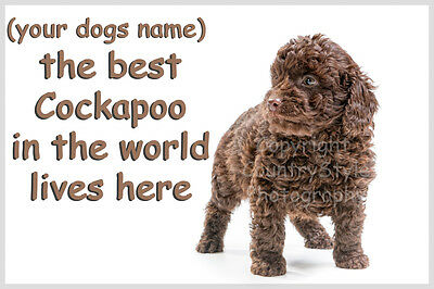 Cockapoo Dog Personalised Fridge Magnet New Gift Chocolate Brown puppy