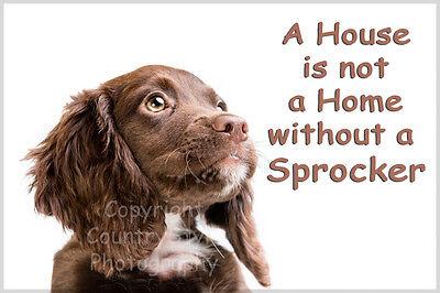 Sprocker Spaniel Dog Funny Fridge Magnet cute new birthday or christmas gift
