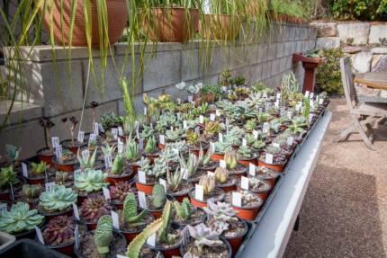 Spring Succulent Sale