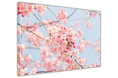 Japanese Cherry Tree on Framed Canvas Wall Art Prints Deco Floral Pictures
