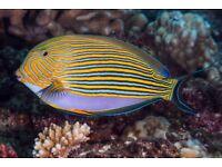 MARINE FISH / CORALS SALTWATER AQUARIUM