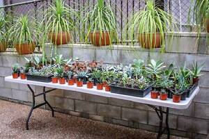 SUCCULENT EXPRESS SALE Woodend Ipswich City Preview