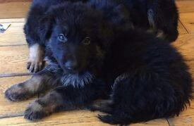 Only 2 left!!! 9 weeks old