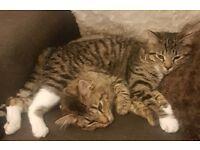 2 female cats