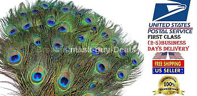 Peacock Feathers Craft DIY Craft Wedding Decoration  Steam cleaned  50 pc Peacock Feathers Wedding