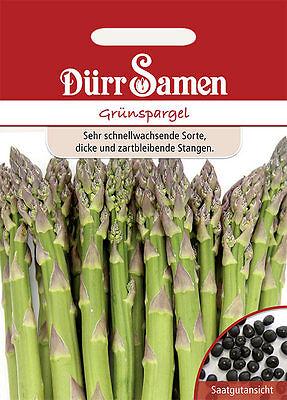 Dürr  Grünspargel schnellwachsend zartes Gemüse - ca. 200  Samen - Saatgut  (Saatgut Schnell)