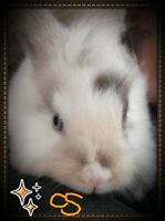 lion head/angora babies! UPDATED!DISCOUNT PRICES FOR CHILDREN!