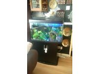 3 foot fish tank with fish and accessories