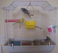 Two pretty budgies with cage for sale