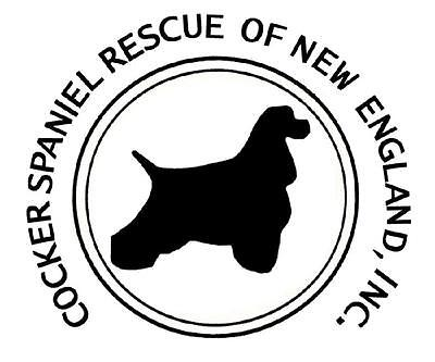 cocker spaniel rescue ma cocker spaniel rescue of new england ebay for charity 255