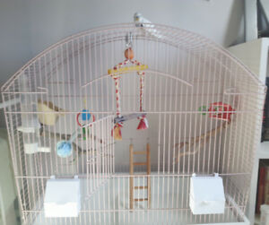 Budgie/Parakeet + Cage, Toys, Food for Sale